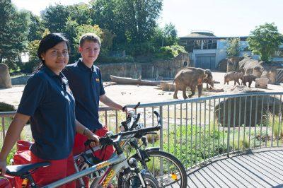 Zwei FSJler mit Fahrrädern bei den Elefanten im Kölner Zoo